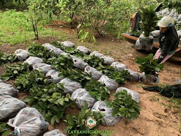 Top 5 địa chỉ mua giống cây ăn quả uy tín nhất tại TP.HCM